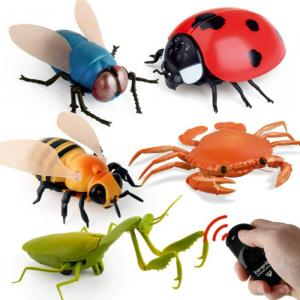 rc insectos
